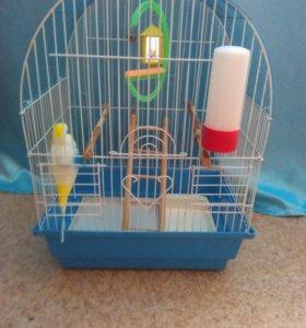 Клетка для попугая + корм ( СРОЧНО!!!)