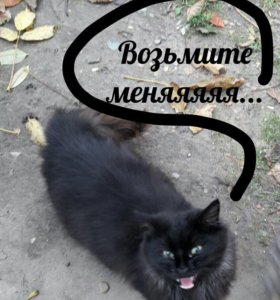 Котик 6 месяцев