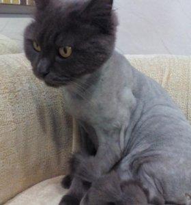 Стрижка кошек с выездом к вам на дом!