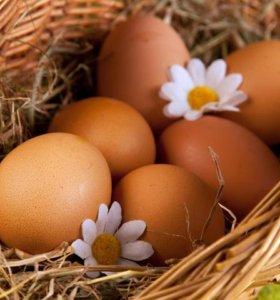Продаются яйца домашние