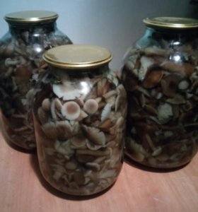 Грибы маринованные в трёх литровых банках 500р