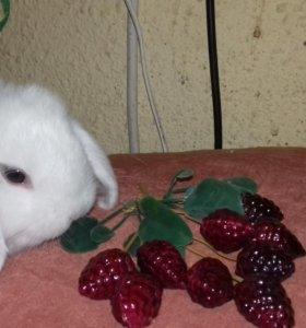 Декоративные кролики вислоухие