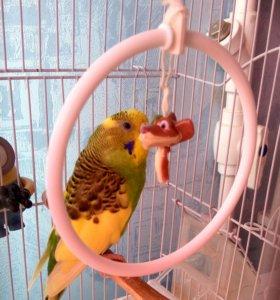 Продаю попугая с клеткой