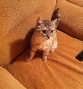 Отдам в хорошие руки котика