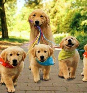 Выгулка собак