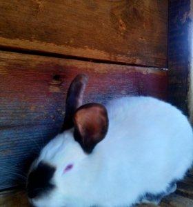 мясо кролика(недорого)