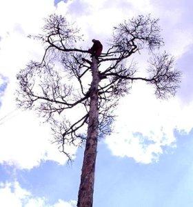Удаление,спил,деревьев