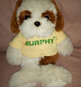 Собачка Merphy