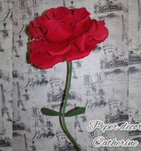 Ростовые цветы( роза)