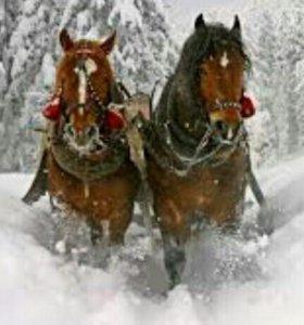 Конные прогулки по зимнему лесу