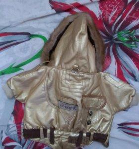 Комплект куртка+ шапка с шарфом для собаки