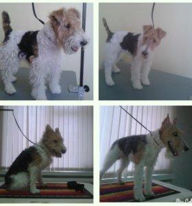 Тримминг собак в Оренбурге!