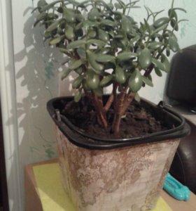 Живое дерево