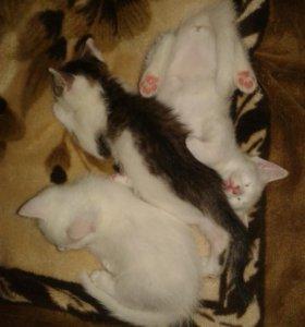 Котёнок 3 месяца