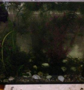 аквариум  тел.89212637866