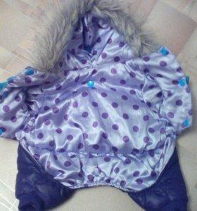 Тёплый костюм для вашего любимца !В НАЛИЧИИ‼️‼️