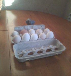 Яйца свойские натуральные