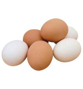 деревенское домашнее яйцо куриное