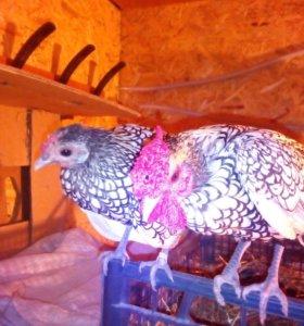Декоративные петушок и курочка