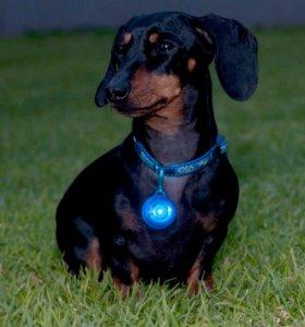 Светящийся кулон RogLite для собак rogz