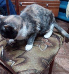 Кошка Пушинка в добрые руки