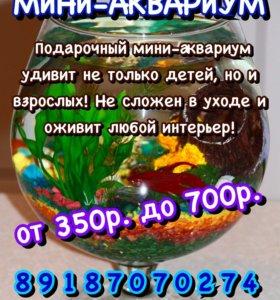 Мини-аквариум )
