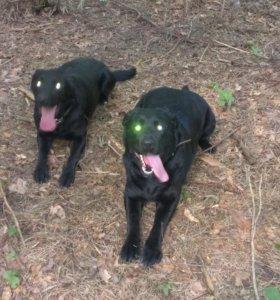 Дрессировка и послушание собак