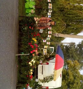 Саженцы,розы,декорация