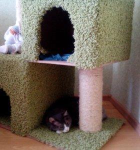 Домики для кошек и собак.