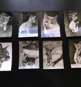 Коллекция раритетных открыток-фото с кошками
