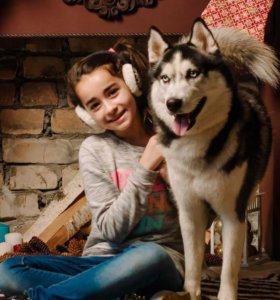 Собака породы Сибирский хаски для фотосессии