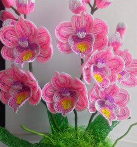 Орхидейка на заказ