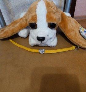 Собачка с браслетом.
