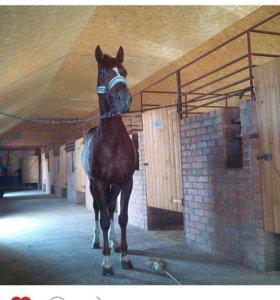 Аренда денника для лошади