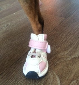 Кроссовки для собаки