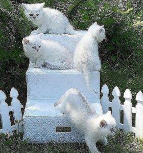 Лесенка для собачек