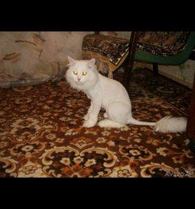 Стрижка котов и кошек.  Мягкие коготки.
