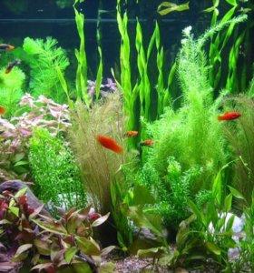 Рыбки и растения