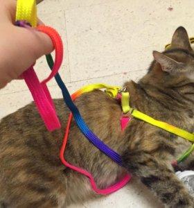 Шлейки для кошек и маленьких собачек