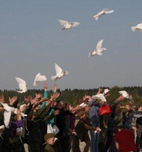 Услуги по выпуску белых голубей на праздники