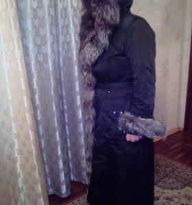 Пихора женская