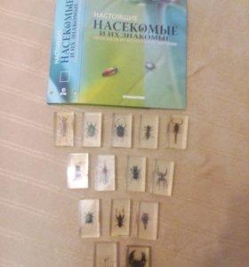 Коллекция насекомых  не полная