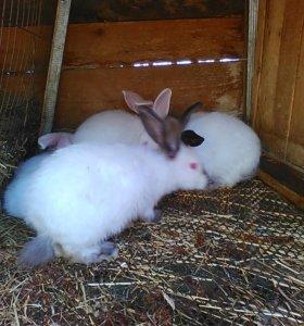 Кроликов поменяю на зерно