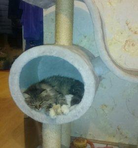 Кошечка, стерелизована,приучена к лотку.