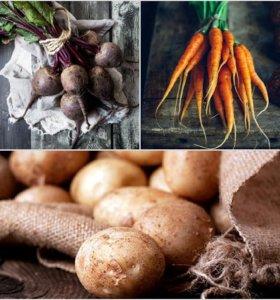 Катрофель, морковь свекла без химии и гмо.