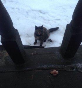 Котята (ищут дом)