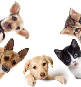 Помогу пристроить  животных