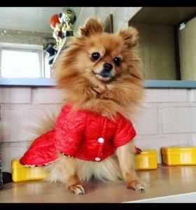 Пальто на собаку
