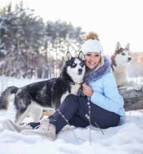 Собаки Хаски для фотосессии и рекламы