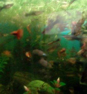 Рыбки гуппи, растения